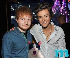 Harry Styles, Ed Sheeran, and OMG kitty