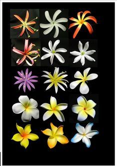 Flowers of Hawaii Exotic Flowers, Tropical Flowers, Silk Flowers, Beautiful Flowers, Hawaiian Flower Drawing, Hawaiian Flowers, Hawaiian Plants, Polynesian Dance, Polynesian Culture