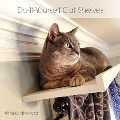 Our first DIY cat shelves and how you can do your own cat shelves on a budget.