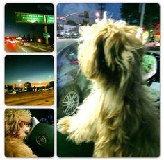 bella thorne kingston photos   Super Adorable Photo Collage Of Bella Thornes Dog, Kingston, November ...