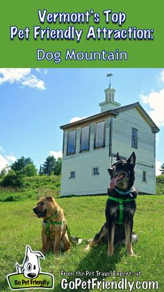 16 best gopetfriendly vermont images on pinterest vermont road vermonts top pet friendly attraction dog mountain solutioingenieria Images