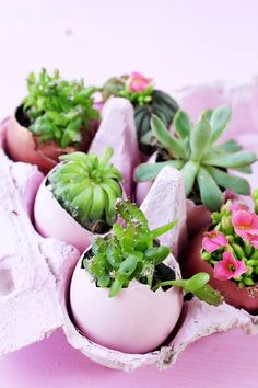 DIY Oster Deko selber machen: Ostereier mit Sukkulenten bepflanzen