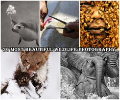 Wildlife photography is perhaps the most common a part of natural photography. life photography captures the life within the right place at the correct time. Wildlife photography is considered one amongst the tougher sorts of photography. Furthermore as needing sound technical skills,