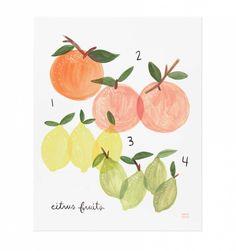 Citrus Illustrated Art Print