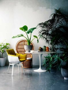 Plants and a polished concrete floor.
