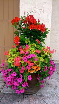 Mandevilla, geraniums, million bells, petunias