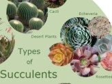 Types of Succulents