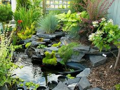 Wow - loving the pond and the variety of plants around it. Starting to make wish list for perennials to plant in the fall.