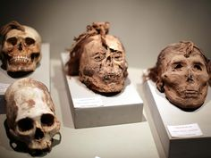 A look at trophy heads in the Paracas History Museum in Peru — the perfect place to learn more about the mysterious people who may have created the Nazca Lines.