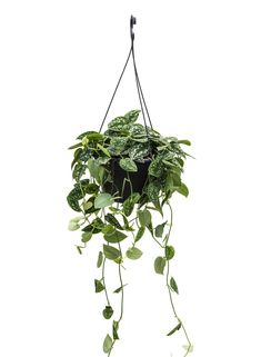 Rare Plants, Potted Plants, Indoor Plants, Happy New Home, Plant Therapy, Interior Plants, Plant Decor, Flower Vases, Indoor Garden