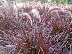 Kleur je tuin met spectaculaire siergrassen: de mooiste soorten op een rij - Nieuws - Tuincentrum Osdorp