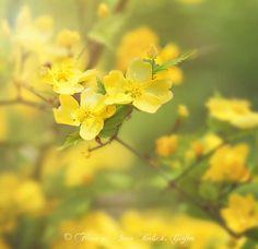 vente de fleurs par internet 82 #fleurs #bouquet