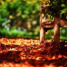 Fall is such a lovely time of year #katonah #nyphotographer #newyork #what_i_saw_in_nyc #ny #travelphotographer #instatravel #trip #beautiful #travelgram #instapassport #instago #wanderlust #mytinyatlas #unlimitedparadise #outdoors #explore #life #vacation #instagood #igtravel #danmleephotography #vacationwolf #passionpassport #fall #abc7ny #fall #autumn #autumn #leaf @abc7ny
