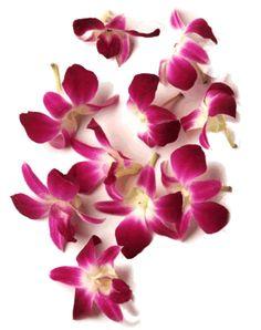 thai flowers - Google Search