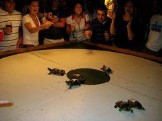 Turtle Races at Big Joe's