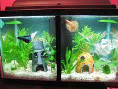 1000 ideas about betta tank on pinterest betta betta for Do betta fish need a filter