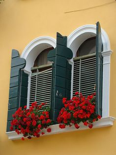 yellow wall and green shuttered windows filled with red flowers