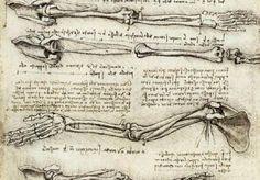 Leonardo da Vinci anatomical drawing of hand and arm