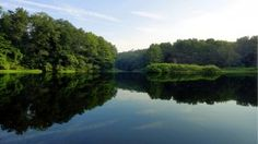 forest trees lake reflection water surface wide hd wallpaper