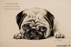 #pug #dog #animal #pet #puppy #drawing #art #realistic #amazing #portrait #doggy #cute #noemisparkle #youtube #howto #pencil #hiperrealistic #cool #sleep