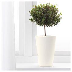 PAPAJA saksı beyaz 12x19 cm | IKEA Ev Dekorasyonu