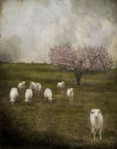 Yesterday, it rained. (Jaime Heiden)