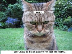 The INTJ look. So true. I'm not angry, just thinking or processing. :)