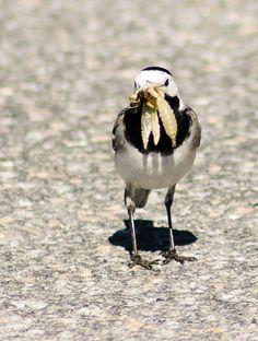 Photo by oldelphi Birds, Animals, Animales, Animaux, Animal, Animais