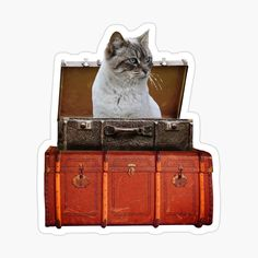 Suitcase Stickers, Old Suitcases, Grey Cats, Designs, Art, Art Background, Gray Cats, Kunst, Performing Arts