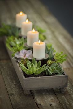 4 Candle Centerpiece Planter - succulents...F.O.G. would like this, a bit of his Mom (chicks and hens) at the rehearsal.