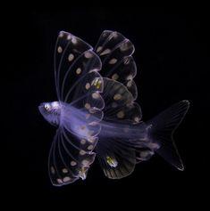 𝒷 - boudhabar: Suzan Meldonian Underwater Creatures, Underwater Life, Underwater Photography, Wildlife Photography, Deep Sea Creatures, Salt Water Fish, Wale, Deep Sea Fishing, Beautiful Fish
