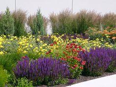A xeriscape garden with plant list.