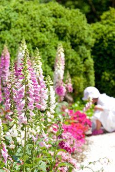 Pink flowers in a green garden #gardeninggreatness