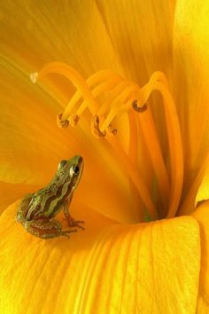 tiny frog in a blossom