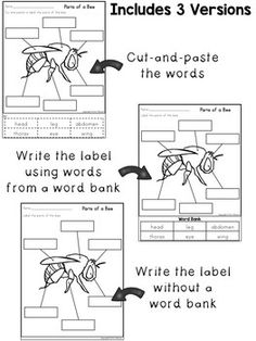 Labeling Worksheets ~ Bug Body Parts Elementary Science, Teaching Science, Science Activities, Elementary Schools, Cut And Paste, Life Cycles, Body Parts, Worksheets, Bugs