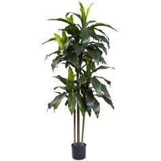 5ft Dracaena Plant UV Resistant (Indoor/Outdoor)  - Standing a full 5 feet in height, this 5' Dracaena Plant really makes a statement, and brings a bit of nature wherever you want it - indoors or out. Fully UV resistant, it has three stout trunks, 58 cascading leaves. Ideal for patios, dens, office reception areas, or anywhere else a bit of natural beauty is required. Makes a thoughtful gift as well. Number of Trunks: 4 Number of Flowers: N/A Number of Leaves: 58 Pot Size: H: 5 In. W: 6 In…