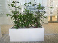 Velký bílý truhlík se závlahou Plants, Plant, Planets