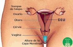 El Blog de Helecho Verde: 8 mitos propagados por las empresas que fabrican copas menstruales -y la verdad detrás de estos Copa Menstrual Meluna, Vagina, Natural, Truths, Nursing, The Moon, Medicine, Health Professional, Health And Wellness