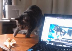So many gifs of cats getting startled, all of them pin-worthy.