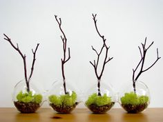4Globe Manzanita Forest  Moss Terrarium by TinyTerrains on Etsy, $55.00