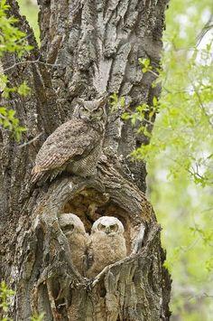 Owls House