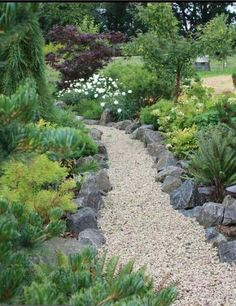 stone lining pea gravel path..