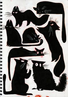 black cats with wonderful personalities. Jade just about shows all of those at some point in the day haha