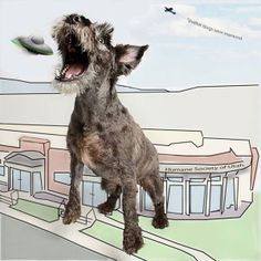 Who Will Save Us from an Alien Attack? Loyal Shelter Dogs | Dogster