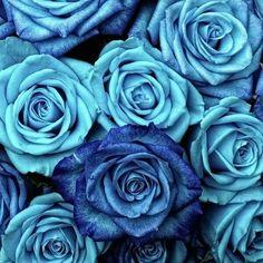 Rose Foto, Beautiful Flowers Wallpapers, Blush Roses, Flower Wallpaper, Blush Wallpaper, Vintage Roses, Garden Art, Roses Garden, Wall Tapestry