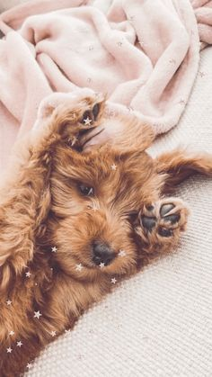 Free iPhone wallpapers – Elizabeth Anne The Effective Pictures We Offer You About Cute Dogs anime A Super Cute Puppies, Cute Baby Dogs, Cute Little Puppies, Super Cute Animals, Cute Dogs And Puppies, Cute Little Animals, Cute Funny Animals, Doggies, Cute Puppy Pics