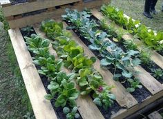 Garden Pallet by inspirationsjardins: Staple garden cloth on the back, fill with soil and plant. Inexpensive, cuts down on weeds and saves water. #Garden #Pallet