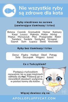 Które ryby są niezdrowe dla kotów, gdy są podane na surowo? Których ryb należy unikać i dlaczego? Dowiedz się więcej o rybach w diecie kota w moim artykule. Halibut, Fluffy Cat, Cats, Blog, Diet, Gatos, Blogging, Cat, Kitty
