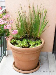 Mini bassin de balcon la nouvelle tendance blog zone aquatique jardin aquatique fontaine - Bassin dans demi tonneau limoges ...