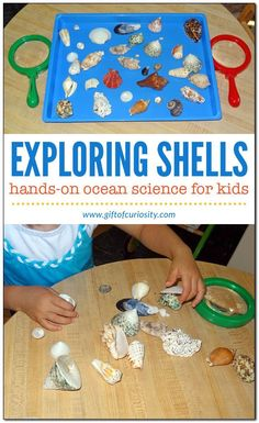 Shell activities for kids - ordering, sorting, examining, and experiencing them with all five senses Ocean science for kids Gift of Curiosity Science Activities For Kids, Science For Kids, Kindergarten Activities, Preschool Crafts, Toddler Activities, Beach Theme Preschool, Sea Activities, Camping Activities, Indoor Activities